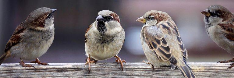 Lintuja keskustelemassa